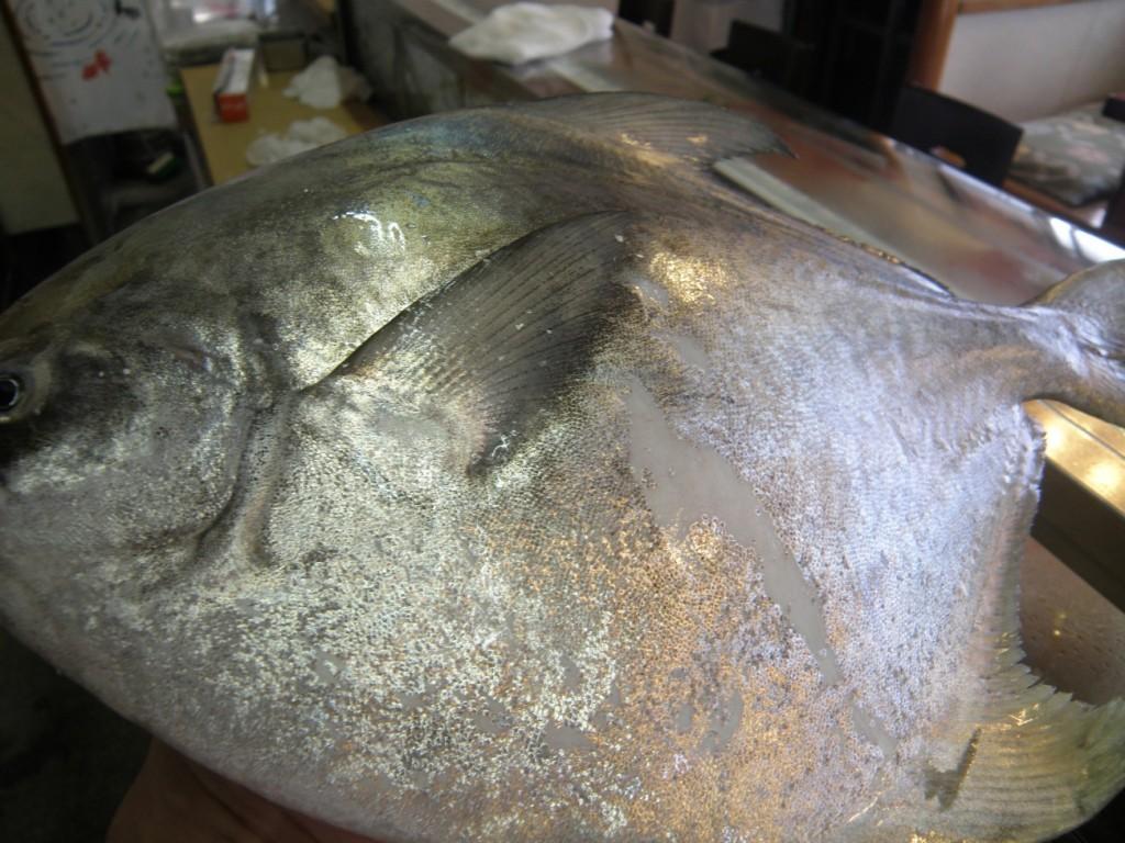 ・お通し・自家製茶碗蒸し・トロの納豆和え.海老のかきあげ・上寿司(1.5人前)(握り10個・鉄火巻き1本)・味噌汁