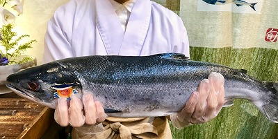 北海道オホーツク海で取れた幻の鮭児 2㌔です。一万本に1本~2本の割合しか取れない貴重な鮭です。脂が物凄く乗っていてムチャクチャ美味しいです♪この機会に是非!