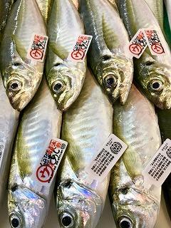 四国愛媛の奥地アジ入荷しました。豊後水道、リアス式海岸・豊富な餌で育った黄金アジです。身が締まっていて脂が乗りバランスの良い鯵です♬1つ1つにワッペン付きで少しづつ有名になってきましたね♪